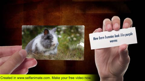 online-video images